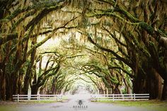 Tree Photography | Southern Plantation | Oak Tree Magical Woodland Tree Tunnel Photography Tree Tunnel Oak Tree Wood Woodland Forest Haunted Outdoor Lover Gift Nature Lover Gift Hiker Gift Southern Gift Simply Southern Wood Gift The Earth Is Blue 15.00 USD #goriani