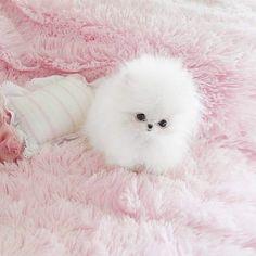 Imagem de pink, puppy, and cute