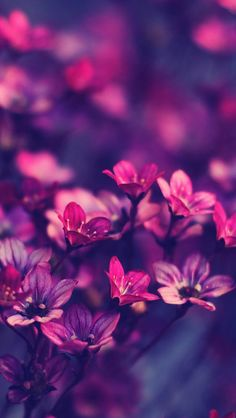 Purple flowers.  HD ios7 wallpaper for iPhone and iPod touch