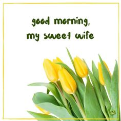 Morning Images have such a power to brighten our day when we stumble upon them! This collection features good morning quotes, all on pics of beautiful flowers. Good Morning Wife, Morning Wishes For Her, Good Morning Love Messages, Morning Wishes Quotes, Morning Quotes For Him, Latest Good Morning Images, Good Morning Picture, Morning Pictures, Morning Pics
