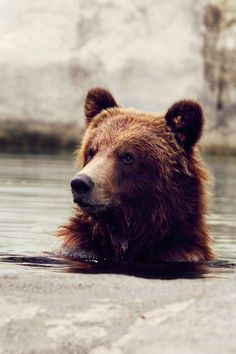 Favorite animals grizzly bear