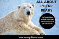 So many online resources about polar bear including YouTube videos, FREE online books both literature and informational text, and art activity too