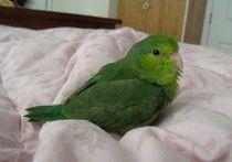 Pretty Little Raphael