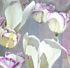 "Like Butterflies ©2013 Collage 7"" x 7.25"""