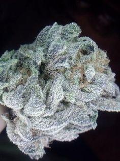 Raspberry Kush Marijuana Strain