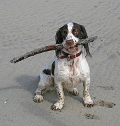 With my stick