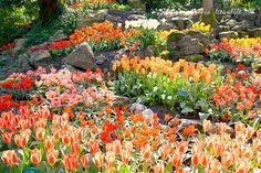 Keukenhof garden - Holland www.aruralchiclifestyle.com Amsterdam Travel, Bird Feeders, Holland, Trips, Bath, Garden, Plants, The Nederlands, Viajes