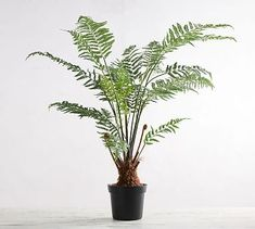 "Faux Potted Australian Tree Fern #potterybarn For living room-24""diameter x 49""H"