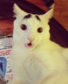 いつも困り果てたネコ「サム(Sam)」の眉毛が世界で爆走中