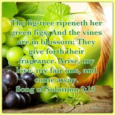 Song of Solomon Bible Verses About Love, Bible Love, Bible Verse Art, Bible Scriptures, Lamentations, Psalms, Christian Facebook Cover, Green Fig, Christian Messages