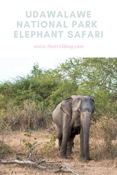 Udawalawe National Park Pinterest image