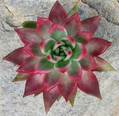 Literally the best site to learn about caring for succulents.