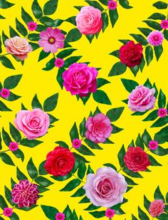Arte FLOWERS PINK Artista Ana Paula Hoppe