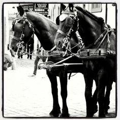 #Tallinn #Tallinna #Estonia #horse  #heppa #hevonen #carriages #blackandwhite #mustavalkoinen #hevosvaljakko #Victorian #neoVictorian #gothic