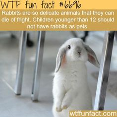 Pet rabbit - WTF fun fact Same with mice, they say. I'm not testing out either one.