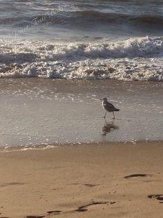 Virginia Beach Birdwalk 2  2014 Nikon D60