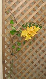 "Apparently ""simple wooden trellises are very cheap"". If they are, they could make beautiful decoration."