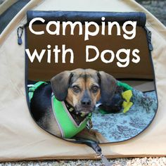 Luna went on her first camping trip where she went swimming and more! Our experience has taught us a few important things for Beginner Camping with Dogs. #beaglesandbargains #camping #dogs http://www.beaglesandbargains.com/camping-dogs-beginners/