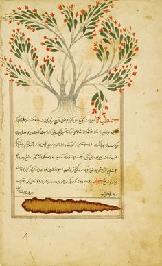 An Illustrated leaf from a Manuscript on Natural Science, Persia, Safavid, 16th/17th century