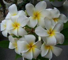 Plant Nutrients - Benefits of Bone Meal and Phosphorus. #flowers #plants #gardening