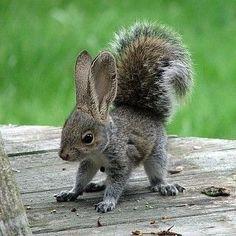 Squabbit squirrel rabbit mix (?!?)