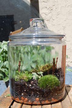 Little Moss Garden In A Glass Jar