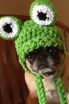 8 awwsome facts about PUGS! Pugs are awesome, adorable, fun, goofy, loving, and so much more! Here are 8 awesome things you may not have known about Pugs Baby Animals, Funny Animals, Cute Animals, Pug Facts, Pugs And Kisses, Cute Pugs, Little Puppies, Pug Love, Awesome Things