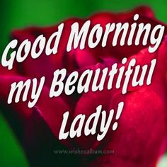 Browse our unique collection and choose between hundreds of good morning messages to send to your lover. A great way to surprise him or her is to send a sweet morning message or image from this awesome list. Good Morning Beautiful Lady, Good Morning For Her, Good Morning Beautiful Quotes, Morning Love Quotes, Good Morning Funny, Good Morning Flowers, Good Morning Greetings, Morning Images, Morning Message For Him