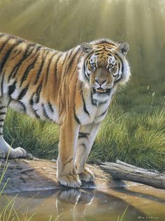 Tiger Painting Art Lesson  Pastel, Free Art Instruction
