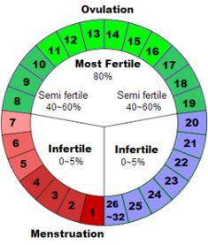 menstrual-cycle-chart