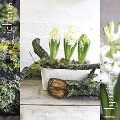 seidenfein 's Dekoblog: Winterdeko: zauberhafte Flechten zu Hyazinthen * magical lichens with hyazinth
