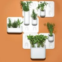 Fresh herbs space from Urbio. Mount the flat magnetic plate on your wall, then stick the company's modu­lar vessels (sold in varying shapes and sizes) into the divots. US$30 and up