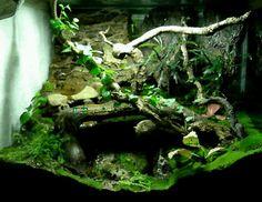 Naturalistic vivarium Gecko Terrarium, Reptile Terrarium, Terrarium Plants, Terrarium Ideas, Reptile House, Reptile Cage, Reptile Enclosure, Crested Gecko Vivarium, Reptile Decor