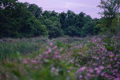 secret places by derek-michael on Flickr.