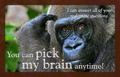 And I never belonged in a Zoo. Winchester Virginia, Cute Wild Animals, I Am Scared, Animal Photography, Marketing, This Or That Questions, Sayings, Real Estate, Gorilla Gorilla