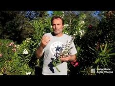 Plantes médicinales : Sauge officinale et Sauge sclarée - YouTube T Shirts For Women, Youtube, Mens Tops, Honey, Salvia Officinalis, Life After Death, Herbal Plants, The Emotions, Custom In