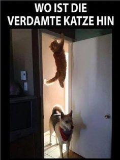 Arme Katze                                                                                                                                                                                 Mehr