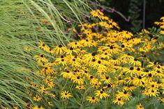 NaturNah: Großer Auftritt Plants, Grand Entrance, Thoughts, Nature, Life, Garten, Flora, Plant, Planting