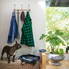 Wall Mounted Coat Rack | Above bench for coats, dog leash and light bags.