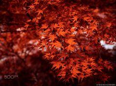 44 paysages colorés qui mettent en évidence la beauté naturelle incroyable de la Terre - page 2