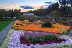 Mums in #Biltmore's Walled Garden are absolutely gorgeous in #fall! Plan your visit: http://biltmo.re/3qlzg