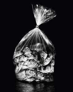 ARgENTUM ~ RULER ~ la potion infinie #photography #blackandwhite #helenakarlsson