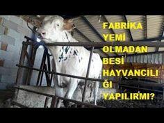 FABRİKA YEMİ OLMADAN BESİ HAYVANCILIĞI YAPILIR MI? Goats, Animals, Animaux, Animal, Animales, Goat, Animais