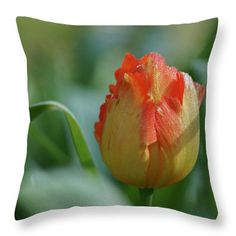 Throw Pillow featuring the photograph Golden Beauty by Helen Kelly