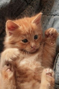 Is there anything quite so sweet as an orange kitten?