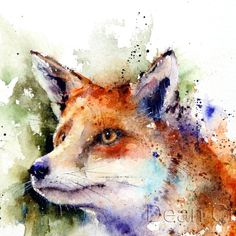 Animal paintings: red fox watercolor nature print by dean crouser. Watercolor Face, Watercolor Animals, Watercolor Paintings, Tattoo Watercolor, Watercolor Walls, Watercolours, Fox In Snow, Fox Painting, Fox Face