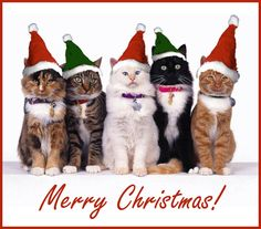 Christmas Cats in Hats