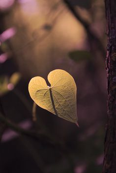 shape and color- the heart shaped leaf has texture and lines