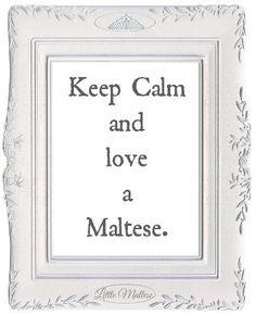 Keep Calm and Love A Maltese :)