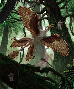 Microraptor by Franco Tempesta